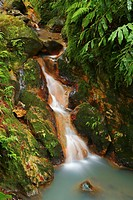 Stream of iron waters in Caldeira Velha park  Sao Miguel island, Azores islands, Portugal