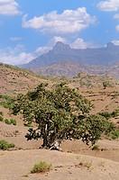 Lalibela region. Ethiopia.