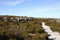 Pathway for people to walk on Table Mountain, Cape Town, Western Cape Province, South Africa