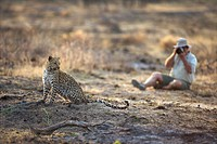 Photographer photographing Leopard Panthera pardus, Namibia.