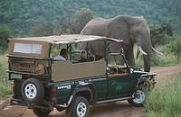 Safari grame_drive watching African elephant Loxodonta africana, Pilansberg, Northwest Province, South Africa