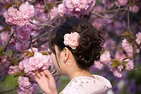 Japanese woman under cherry blossom