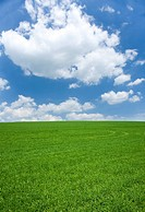 Field of grass and cloudy sky (thumbnail)