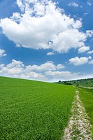 Path through field of grass and cloudy sky