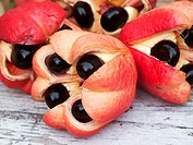 Close_up of fresh, ripe ackee, Kingston, Surrey, Jamaica