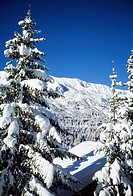 Snow covered pine trees, Trois Vallees, Haute Savoie, Alps, France