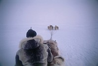Photograph of a traditional dog sleds of the native Eskimos in Baffin Canada