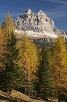 Tre Cime di Lavaredo mountains, Three Peaks seen from Pale die Misurina, Dolomites, South Tyrol, Italy, Europe