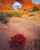 Indian Paintbrush in Spring North Window Arches National Park near Moab Utah