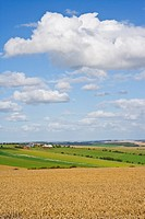 Clouds in sunny blue sky over wheat field and countryside