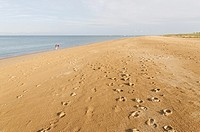 Beach of Les Saumonards. Boyardville. Island of Oleron. Charente Maritime. France.