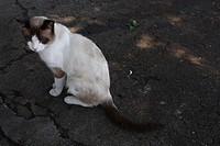 Animal, Cat, Campinas, São Paulo, Brazil