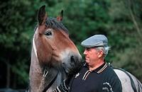 Ardennes horse Equus przewalskii f. caballus, portrait, with breeder