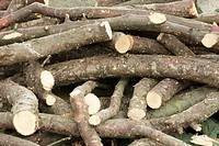 Wood, Firewood, Meyzieu, Rhône 69, Rhône_Alpes, France