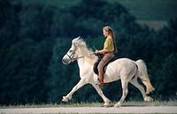 Islandic horse, Iceland pony Equus przewalskii f. caballus, horsewoman