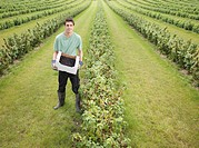 Man With Box Of Harvested Blackcurrants