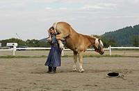 Haflinger horse Equus przewalskii f. caballus, dressage presentation, Hungary