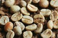Arabian coffee Coffea arabica, unroasted beans