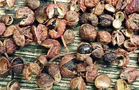 Sichuan pepper, Szetchwan pepper, Anise pepper, Sprice pepper, Chinese pepper, Japanese pepper, Japanese prickly ash Zanthoxylum piperitum, fruits cap...