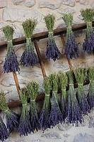 lavender Lavandula angustifolia, Lavandula officinalis, hanging bouquets, France, Provence