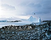 Adelie Penguins Pygoscelis adeliae, polar sea, icebergs, ice floes, Antarctic
