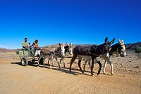 Donkey cart, common transport in Riemvasmaak, South Africa, Northern Cape