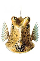 Historic illustration, Boxfish Ostracion cornatus, tablet 42, Ernst Haeckel, Kunstformen der Natur, Artforms of Nature