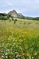 spring landscape, Arzachena, Sardinia, Italy
