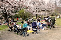 Group of mothers with prams during cherry blossom at the Botanical garden, Kyoto, Japan, Asia