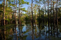 Bayou Sorrel, Louisiana - A cypress-tupelo forest in the Atchafalaya River Basin