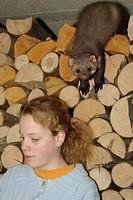 beech marten, stone marten Martes foina, climbing on a pile