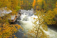 A cabin and Myllykoski rapids of Oulanka National Park in Kuusamo when forest glowing with autumn tints. Finland.