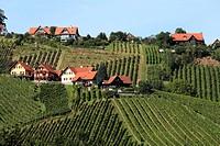 Vine yards on Schilcher Weinstrasse, Steinreib near Stainz, Styria, Austria, Europe