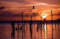 Silhouette of seagulls on posts in sea at sunset