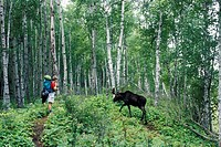 Isle Royale National Park, Michigan - Martha Gruelle waits for a moose to cross the trail while backpacking on the Minong Ridge Trail  MR