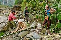Forest workers cutting bamboo, Phon Kan Razi Wildlife Sanctuary, Kachin State, Burma, Myanmar, Asia