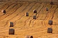 field with bales of hay, blue sky, bohemia, czech republic