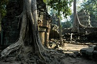 Mystic temple in the jungle overgrown by big roots and trees, Ta Prohm Temple, Angkor, Siem Reap, Cambodia, Southeast Asia