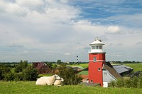 Sheps and lighthouse, Hollerwettern, Schleswig_Holstein, Germany