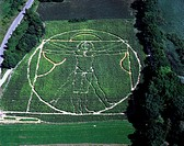 Vitruvian Man from Leonardo da Vinci, cornfield labyrinth, Germany, Bavaria, Scala_Dei, Utting, Schondorf