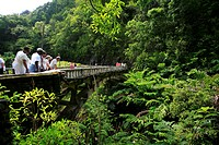 View of a bridge on the road to Hana, popular tourist road, east coast of Maui Island, Hawai'i, Hawaii, USA