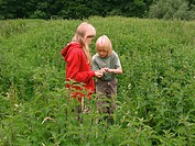 stinging nettle Urtica dioica, boy and a girl searching for animals between nettles