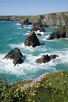 Bedruthan Steps at the west coast, United Kingdom, England, Cornwall