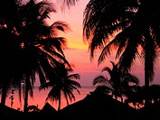 sunset with palms, Thailand