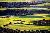 Fields of Valdizarbe  Navarra  Spain