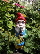 lady´s mantle Alchemilla mollis, garden gnome between plants, smoking a pipe