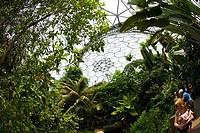 Rainforest dome interior daylight daytime Eden Project St Austell Cornwall England UK United Kingdom GB Great Britain British Isles