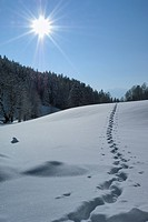 snowy landscape with track, Germany, Bavaria, Berchesgarden