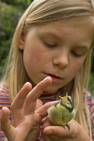 blue tit Parus caeruleus, girl with fully fledged chick on her hand