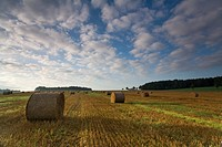 stubble field with straw balls, Germany, Saxony, Vogtlaendische Schweiz